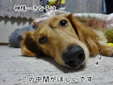 kinako3721.jpg