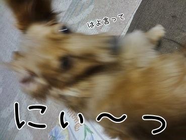 kinako3734.jpg