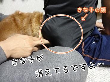 kinako3741.jpg