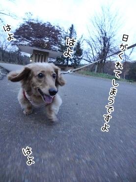 kinako3743.jpg