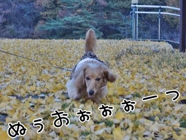 kinako3745.jpg