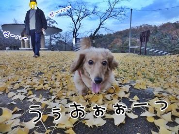 kinako3746.jpg