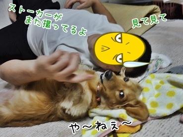 kinako3755.jpg