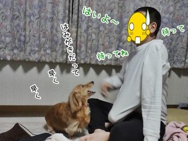 kinako3757.jpg