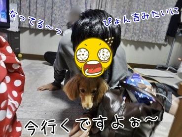 kinako3761.jpg