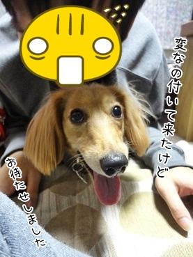 kinako3762.jpg