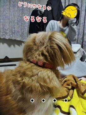 kinako3766.jpg