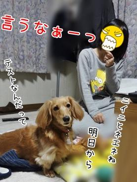 kinako3767.jpg