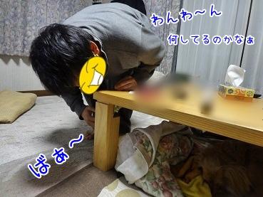 kinako3768.jpg