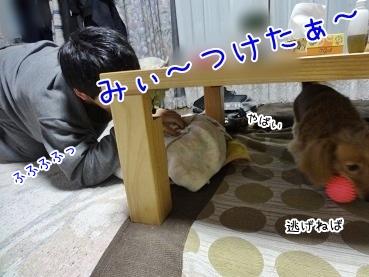 kinako3770.jpg