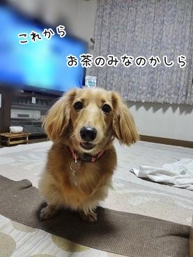 kinako3774.jpg