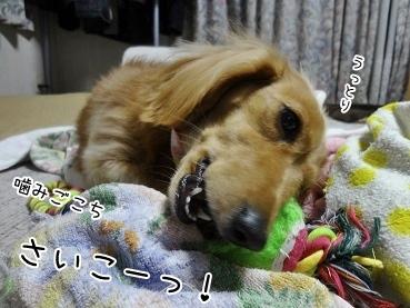 kinako3789.jpg