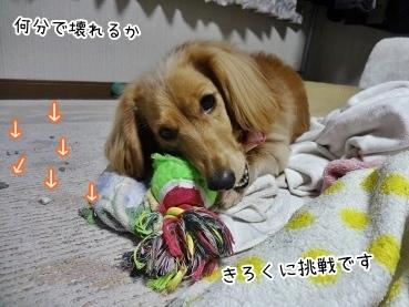 kinako3791.jpg