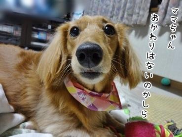kinako3792.jpg