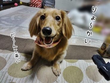 kinako3803.jpg