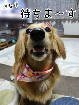 kinako3804.jpg