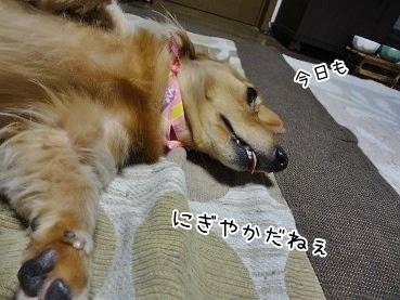 kinako3806.jpg