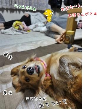 kinako3812.jpg