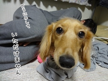 kinako3829.jpg