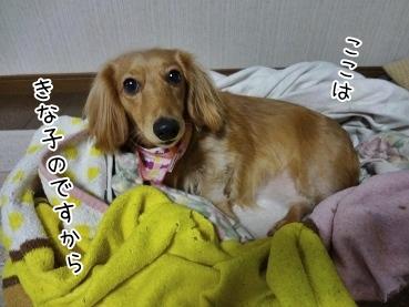 kinako3830.jpg
