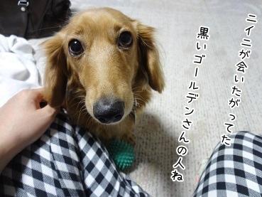 kinako3846.jpg