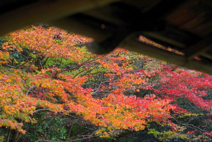 京都紅葉狩り (2)