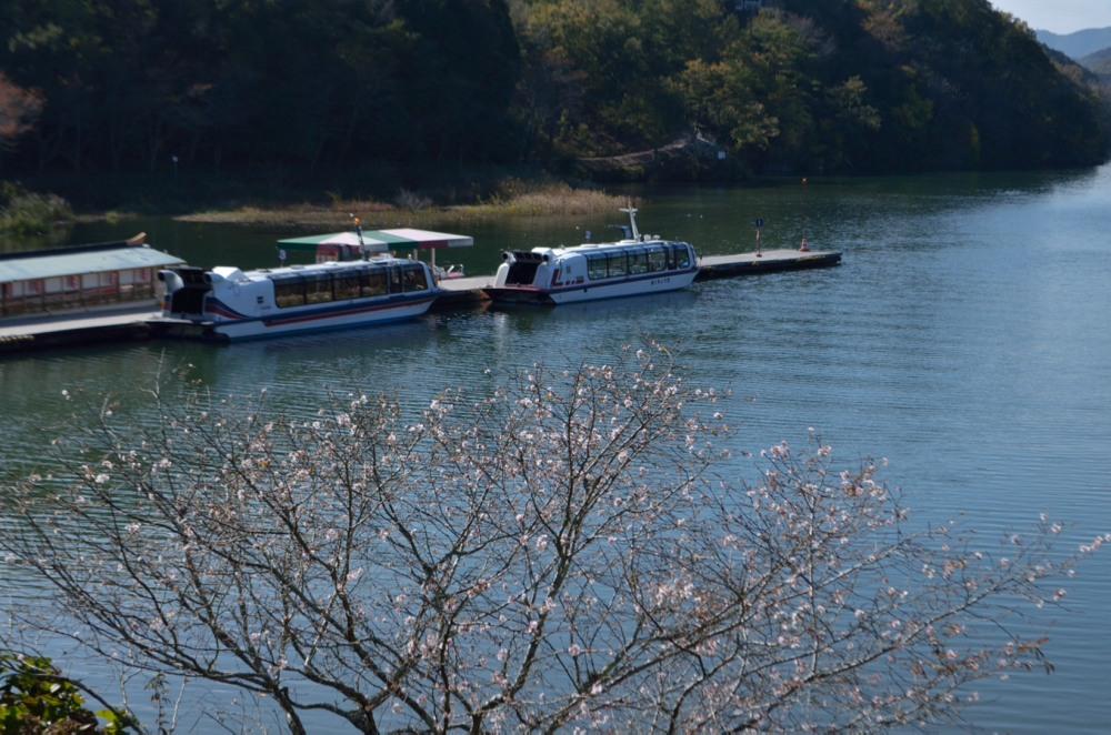 _十月桜と遊覧船DSC_6741