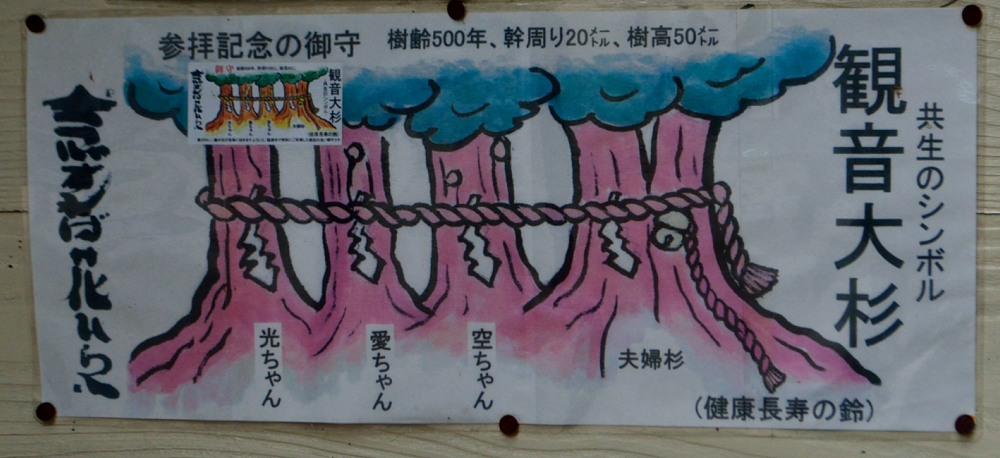 _遠山郷観音大杉DSC_7124