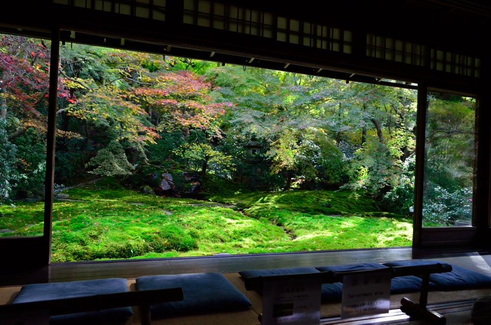 _瑠璃の庭DSC_7888