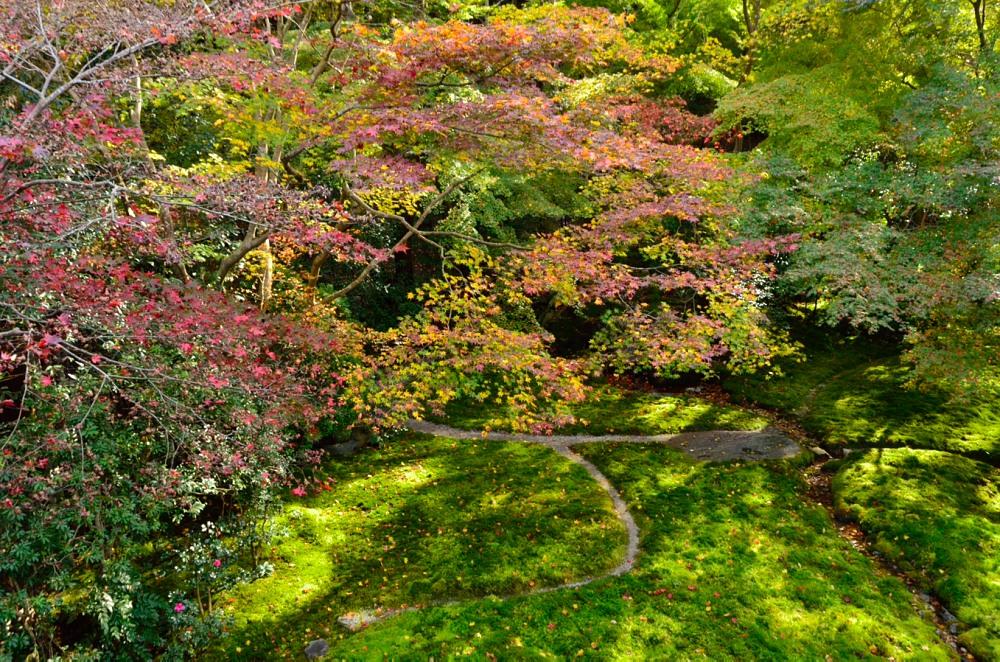 _二階瑠璃の庭DSC_7776
