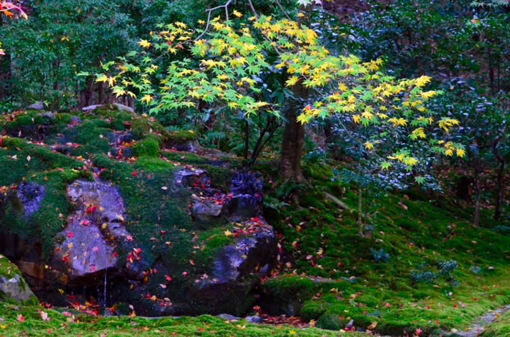 _瑠璃の庭 泉石DSC_8001