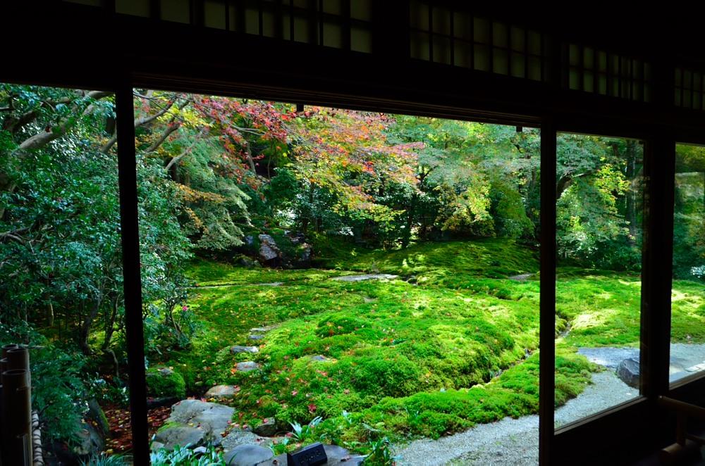_瑠璃色の庭DSC_7896