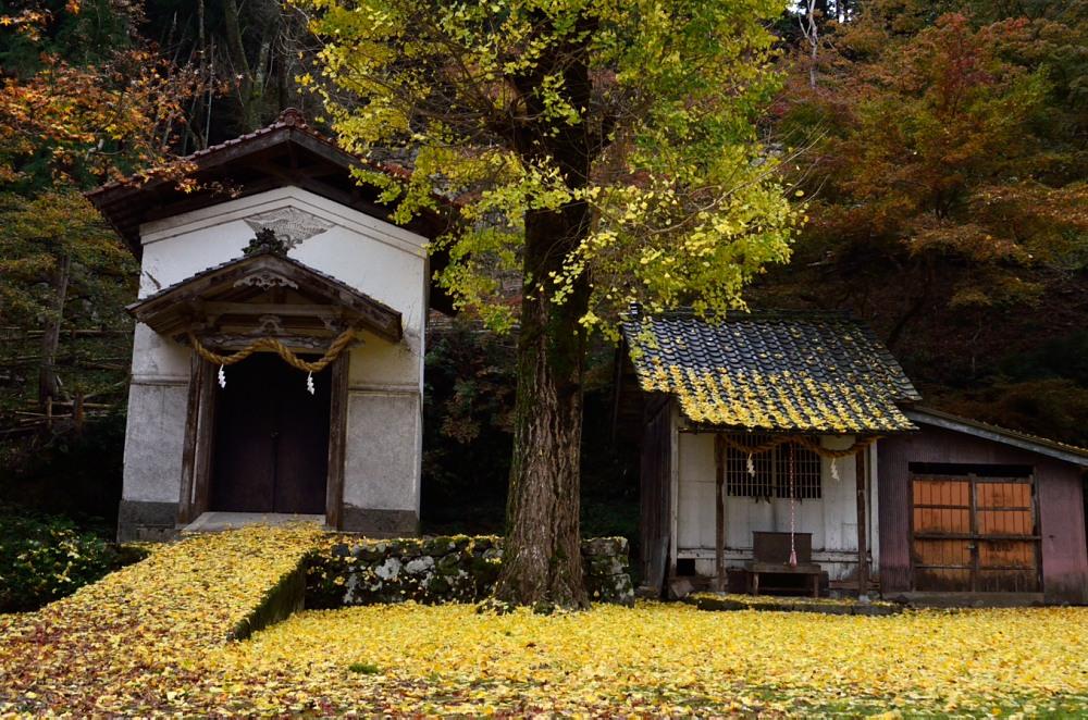 _諸杉神社DSC_7592