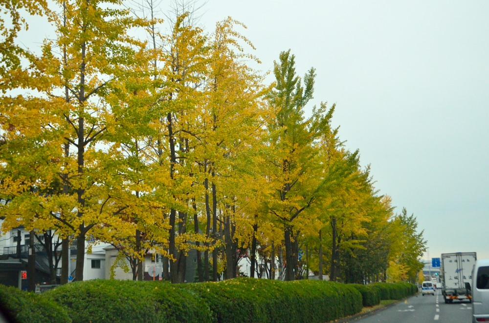_大阪道路DSC_7704