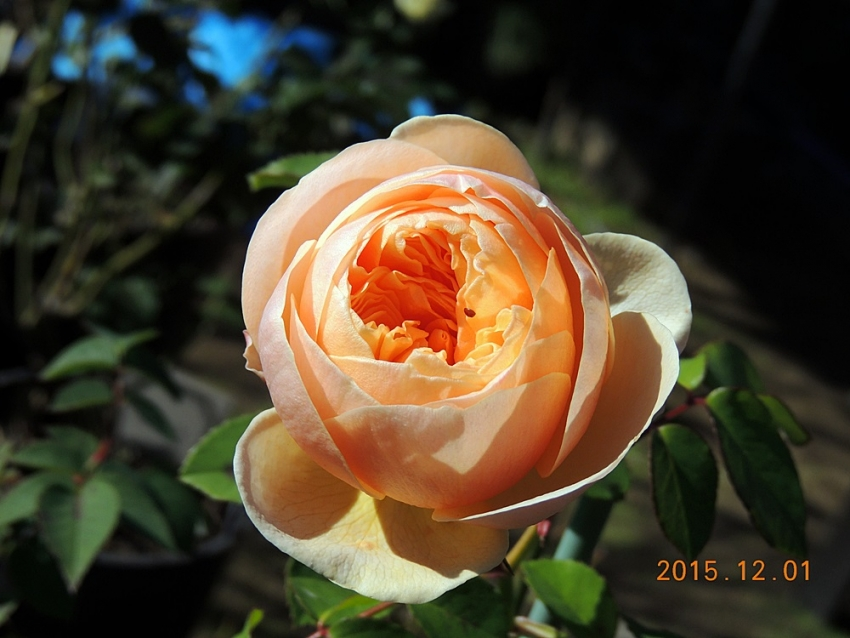 002_20151202194956fb7.jpg