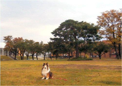 03 500 20151022 芝生公園 秋色Erie