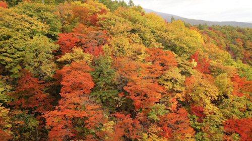 02b 500 20151015 松川渓谷の紅葉