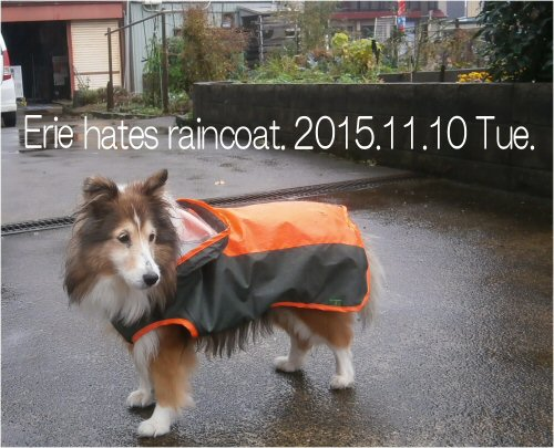 01 500 20151110 Erie hates raincoat