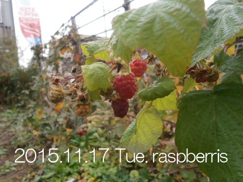 02 500 20151117 Raspberry