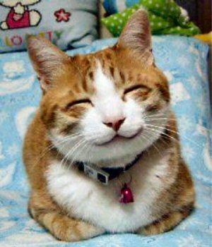 04 275a smiling cat