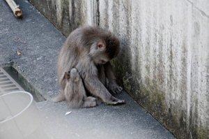 07b 300 いじけ猿