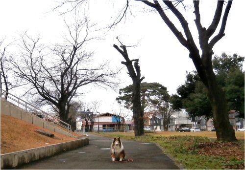 07b 500 20151206 桜並木WadaBeingBuilt Erie