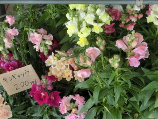 スーパーの花屋さん2
