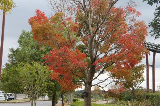 運動公園の紅葉