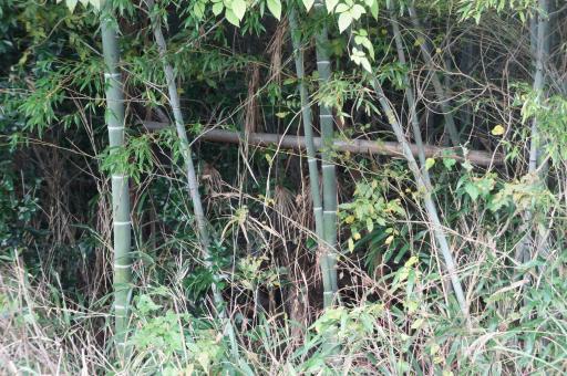 荒れた竹林2