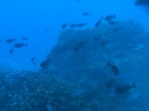 サイパンの深海