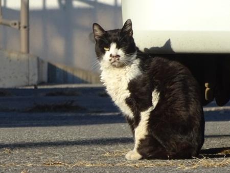 歩いていると猫、猫。5