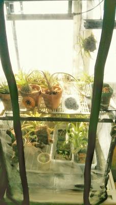 チランジア温室