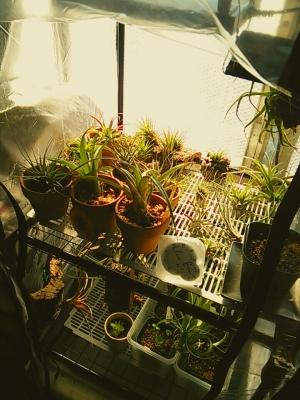 チランジア温室2