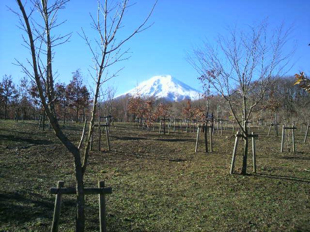 富士山(富士散策公園)